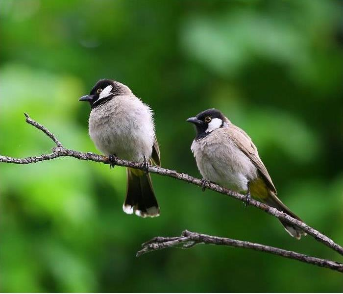 Cloes-up of two birds on a branch