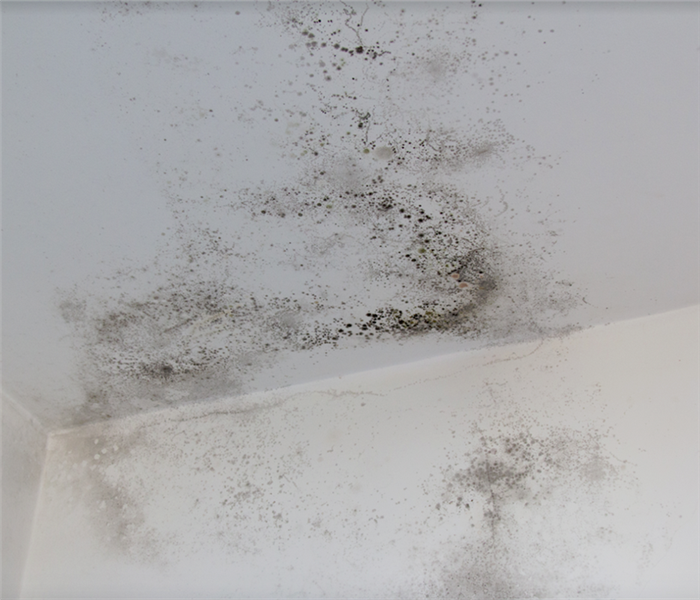 mold growing on the walls of a room