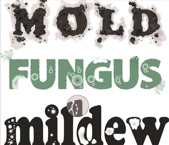 sign for mold fungus mildew